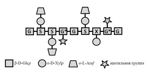 Арабиноксилоглюкан пасленовых